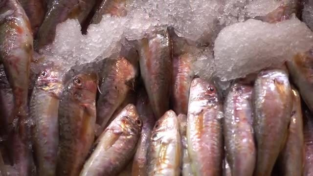 Red Mullet: Stock Video
