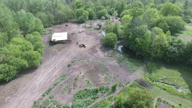 Aerial Over Horse Ranch: Stock Video