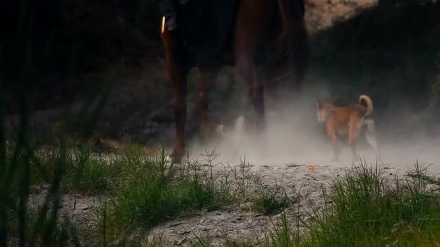 Horse And Dog Running: Stock Video