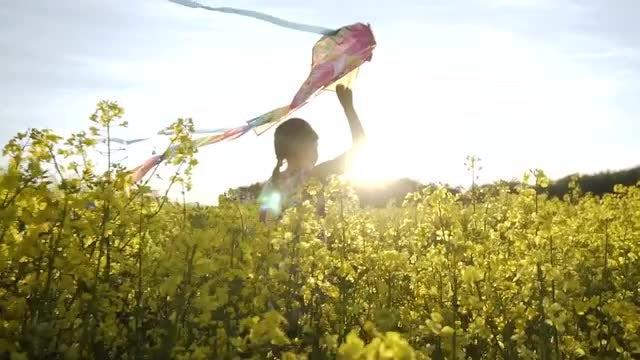 Flying Kite In Field: Stock Video