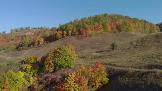 Hilly Area With Autumn Trees: Stock Video