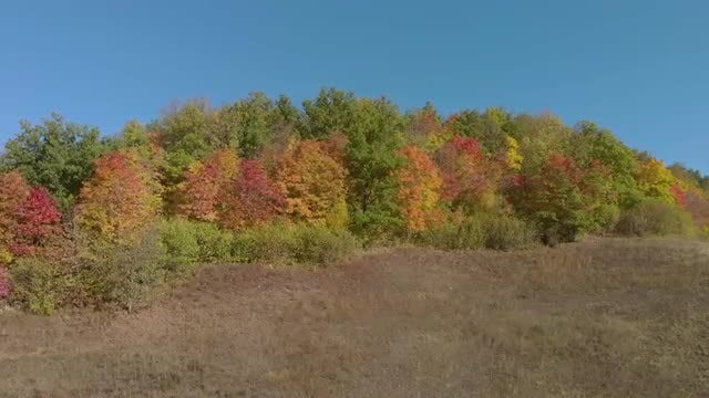 Hill With Autumn Trees: Stock Video