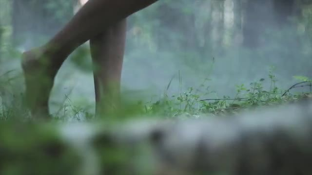 Woman Legs Walking In Forest: Stock Video