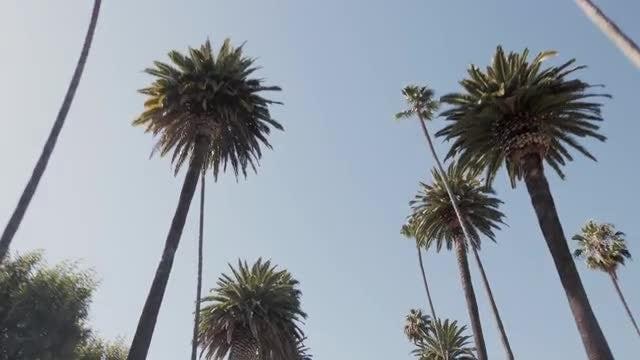 Palm Trees 4k: Stock Video