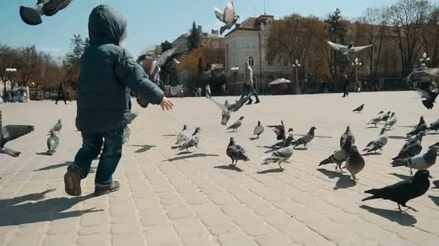 Boy Playing with City Doves: Stock Video