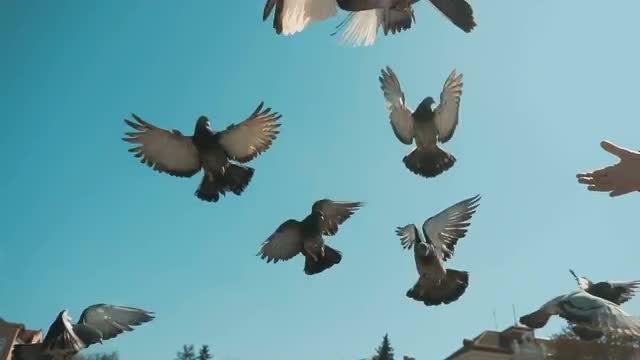 Children Feeding City Pigeons: Stock Video