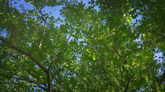 Green Tree In Summer Forest: Stock Video