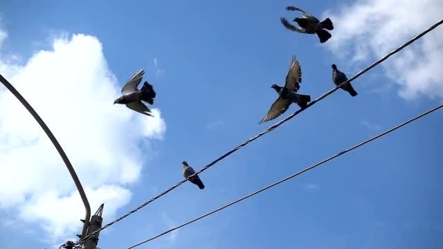 Perched Pigeons On Electric Wires: Stock Video