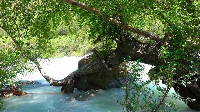 Birch Tree Submerged In Water: Stock Video