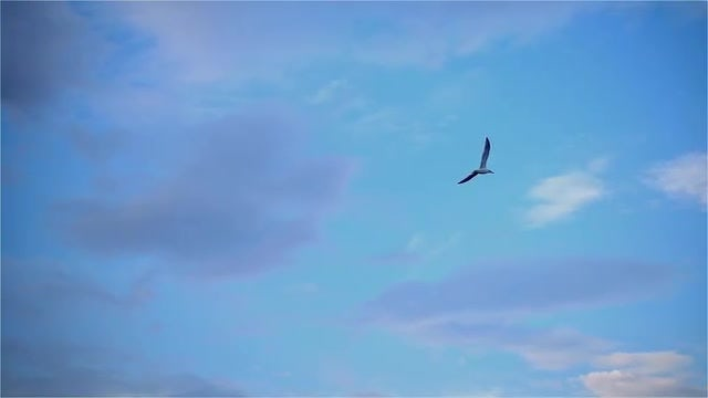 Seagull Flying In Slow Motion: Stock Video