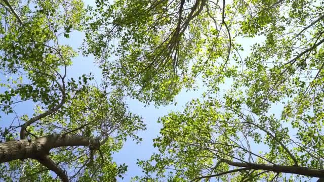 Rotating Low-angle Shot Of Trees: Stock Video