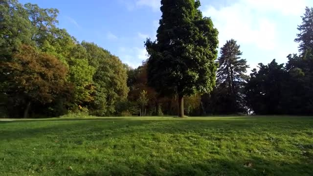 Driving Through The Lush Park: Stock Video