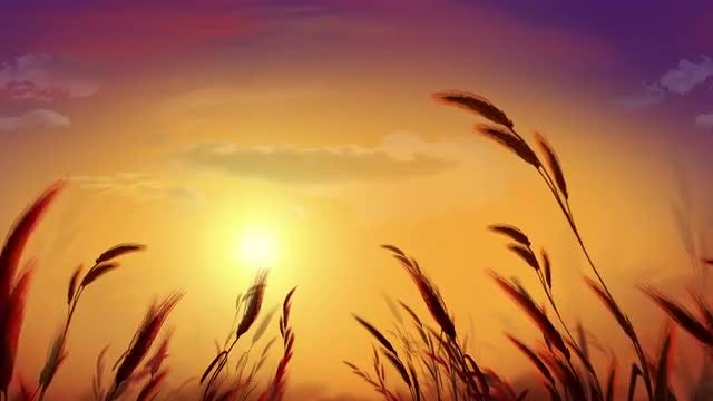 Meadow During Sunset: Stock Motion Graphics