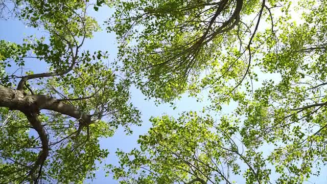 Rotating View Of Tree Canopy: Stock Video