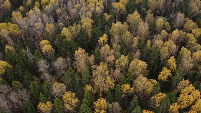 Autumn Forest Aerial View: Stock Video