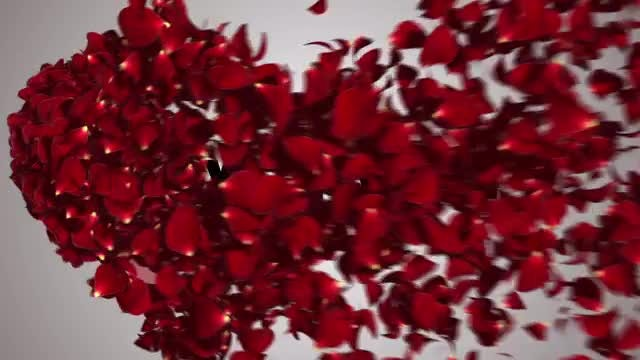 Heart Rose Petals Message Reveal: Stock Motion Graphics