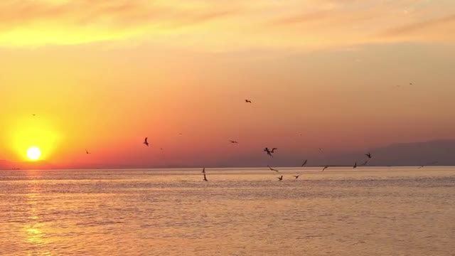 Yellow Sunset Sea With Birds: Stock Video