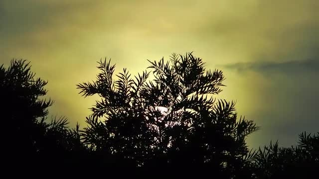 Tree Leaves Silhouette During Sunset: Stock Video