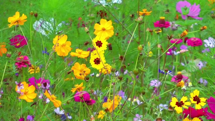 Close-up Shot Of Colorful Flowers: Stock Video