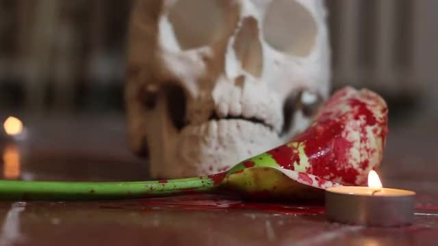 Bloodied Flower And Skull: Stock Video