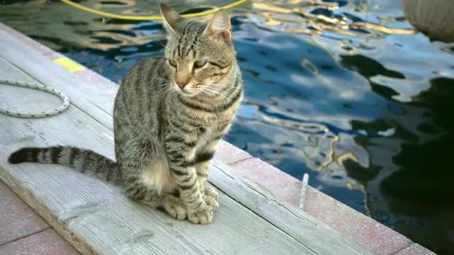 Lonely Cat On The Dock: Stock Video