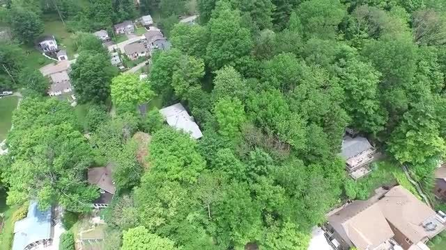 Residential Homes Under Tall Trees: Stock Video