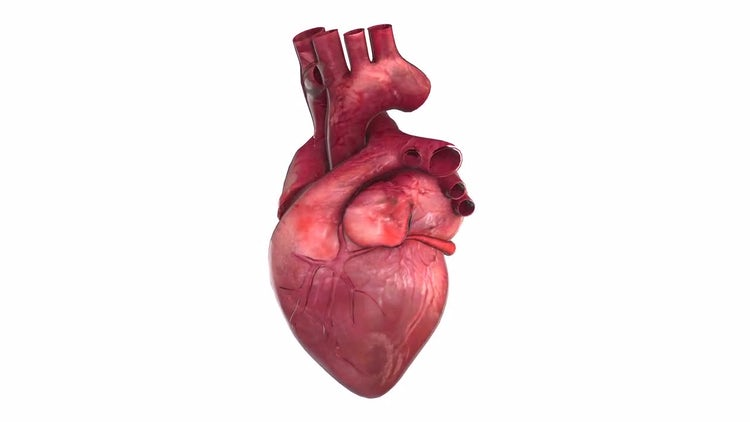 4K Heart Animation: Motion Graphics