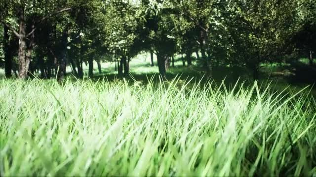 Exploring A Green Park: Stock Motion Graphics
