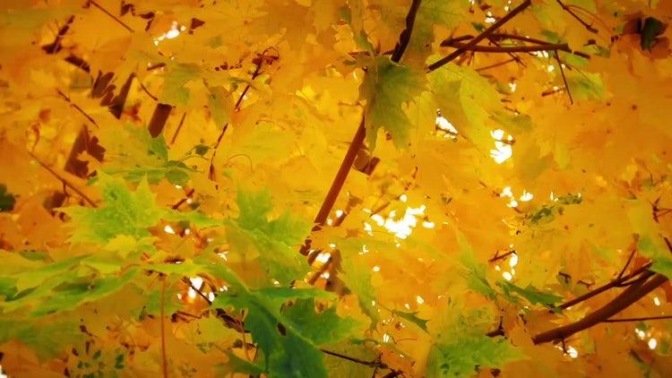 Autumn's Orange Nature Background: Stock Video