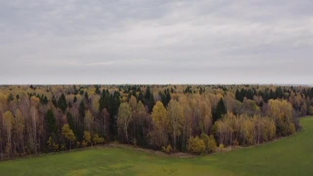 Autumn Forest: Stock Video