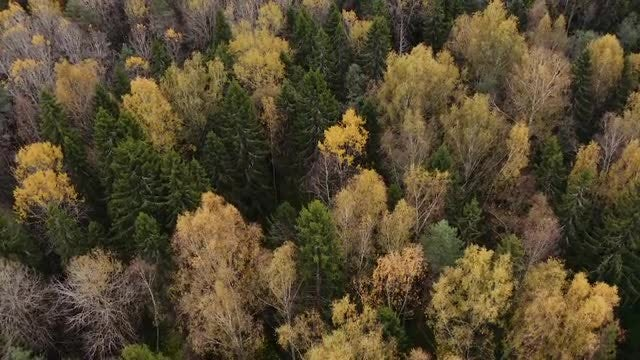 Yellow and Green Treetops: Stock Video