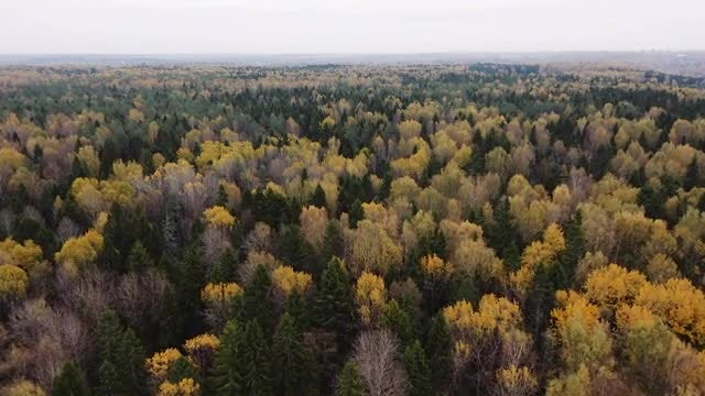 Endless autumn forest: Stock Video