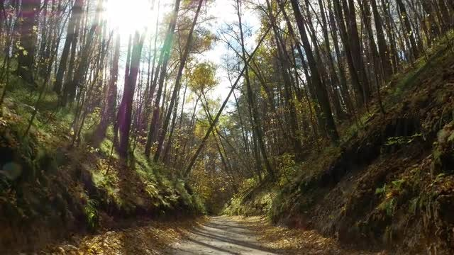 Sun Shining Over Autumn Forest: Stock Video