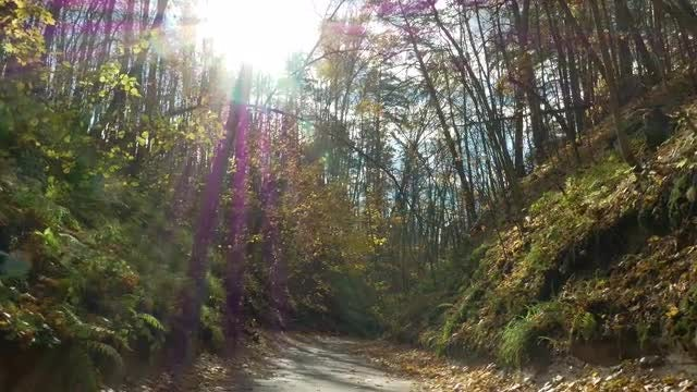 Following A Mountain Forest Path: Stock Video