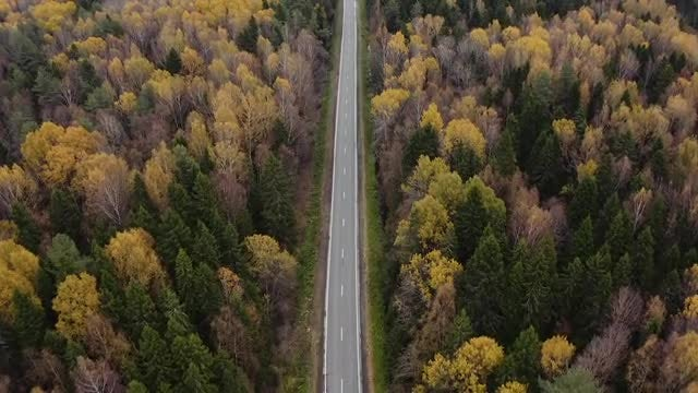 Empty Road In Autumn Forest: Stock Video
