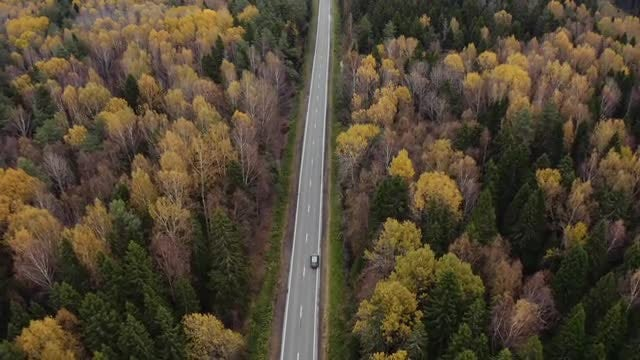 Cars Driving Through The Forest: Stock Video