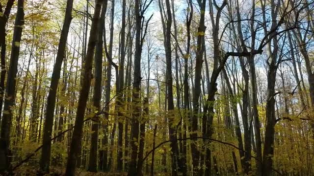 Hiking Through An Autumn Forest: Stock Video