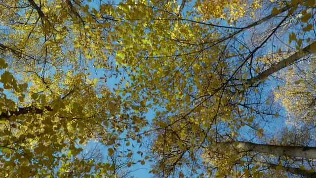 Walking Under Autumn Trees: Stock Video
