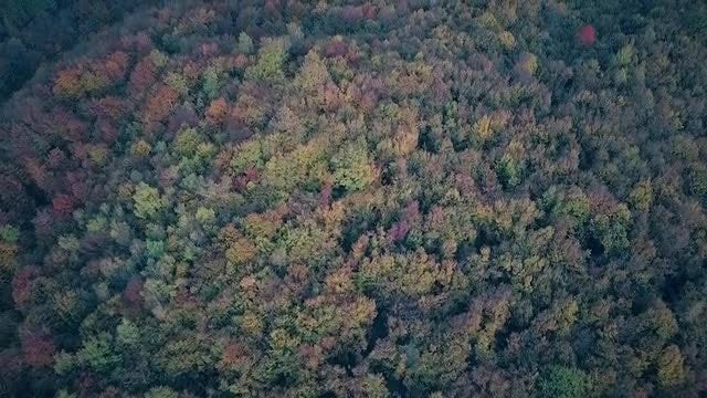 Flying Over An Autumn Forest: Stock Video