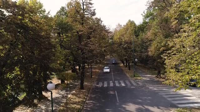 A Beautiful Tree-Lined Avenue: Stock Video