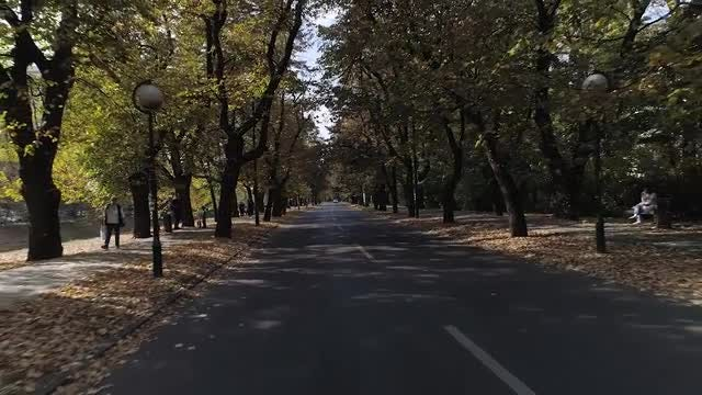 Beautiful Alley In The Park: Stock Video