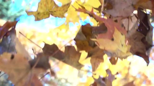 Leaves Falling In Slow Motion: Stock Video