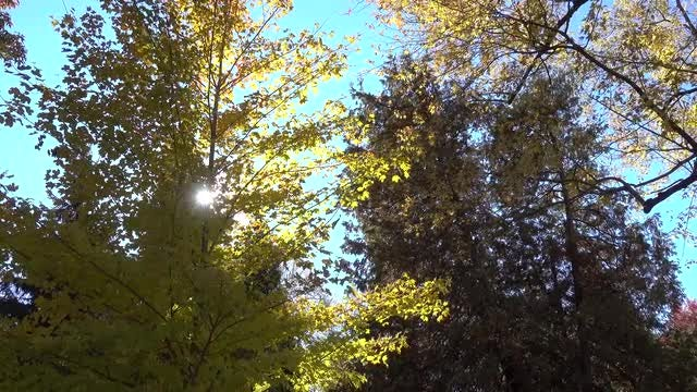 Autumn Trees With Colorful Leaves: Stock Video