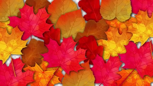 Bright Autumn Leaves Transition Pack: Stock Motion Graphics