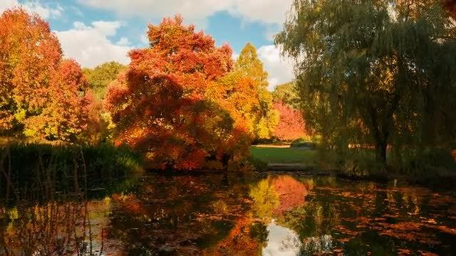 Amazing Autumn Landscape: Stock Video