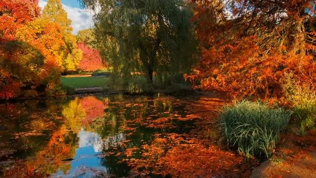 Beautiful Autumn Landscape: Stock Video