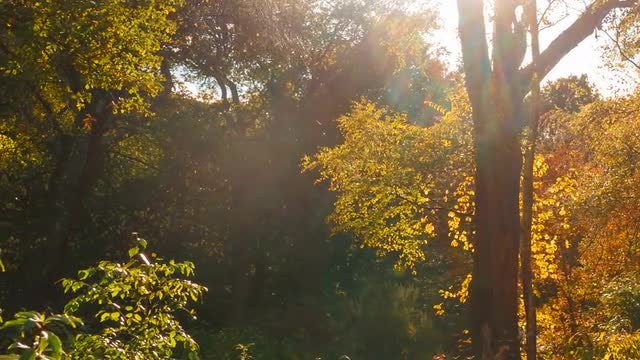 Golden Hour In Magic Forest: Stock Video
