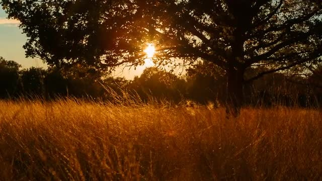 Fields Of Gold: Stock Video