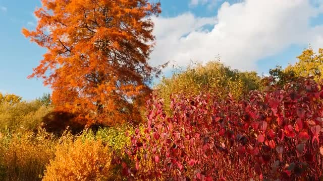 The Colors of Autumn: Stock Video