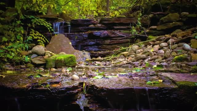 Small Forest Waterfall Time Lapse: Stock Video